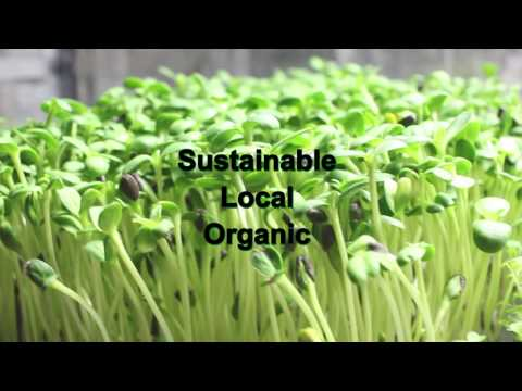 San Diego Hometown Harvest | Microfarms - Solar Power Shipping Container Greenhouses