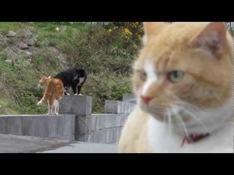Угадай какой кот кастрированный :)