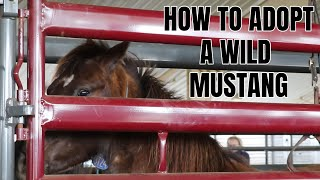 How To Adopt a Wild Mustang