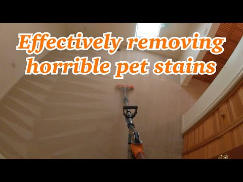 How We Remove Pet Stains And Urine Odors Step By Step
