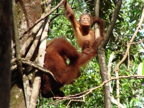 Expedition Malaysia & Borneo - von der City in den Urwald