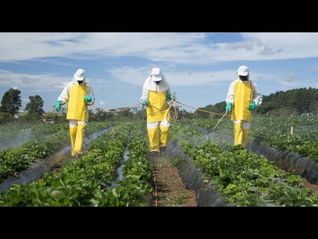 7. Superodżywianie -  Pestycydy