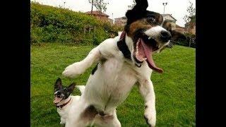 Счастливые собаки довольные жизнью II