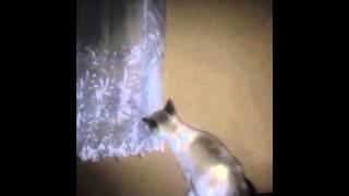 Копия видео Падение Кошки
