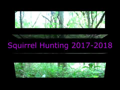 Squirrel Hunting At Jim Edgar Panther Creek State Fish And Widlife Area 2017 2018
