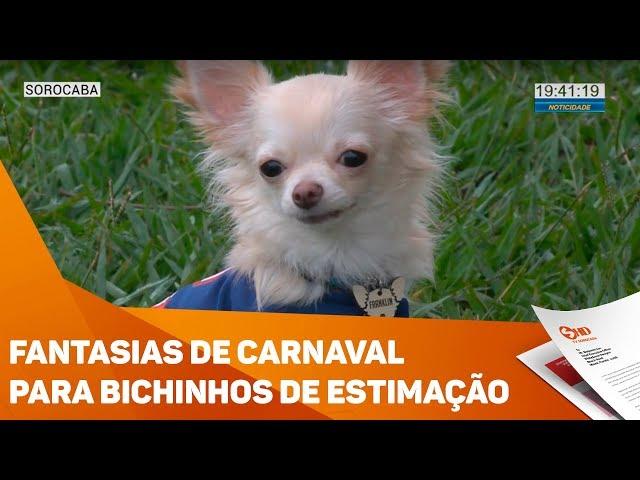 Fantasias de carnaval para bichinhos de estimação - TV SOROCABA/SBT