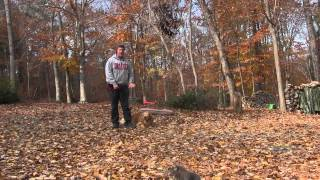 Freddie | Golden Retriever Dog Training Greensboro Nc