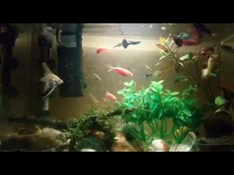 Goldfish,angel Fish, Danio Zebra ,aquarium Planted,guppy Fish,zebra Fish