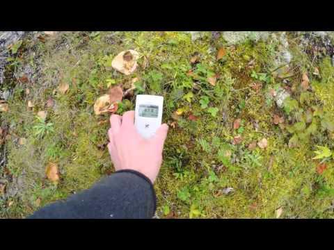 Экологическое обследование острова Макаринсаари (Ладожское озеро)