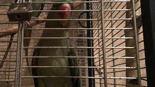 Содержание попугаев в клетке и вопросы о попугаях
