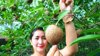 Yummy Sapodilla Fruit Ripen - Sapodilla Fruit - Cooking With Sros