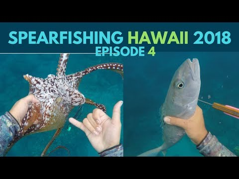Spearfishing Hawaii:Ulua House(Giant Trevally), Tako Diving(Octopus), and an Uku(Green Snapper)
