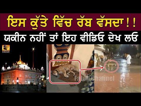 Xclusive Video - ਕੋਈ ਰੱਬੀ ਰੂਹ ਹੈ Sri Hazur Sahib ਰਹਿੰਦਾ ਇਹ ਕੁੱਤਾ-Blind Dog Full Reality
