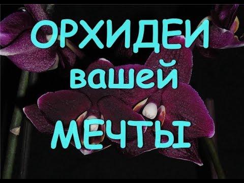 Орхидеи вашей мечты. Интернет магазин.