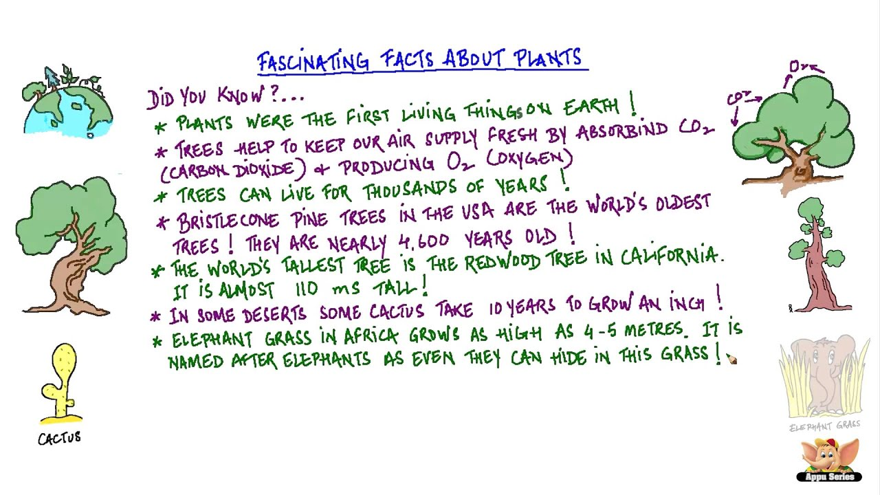 Fascinating Facts About Plants Youtube