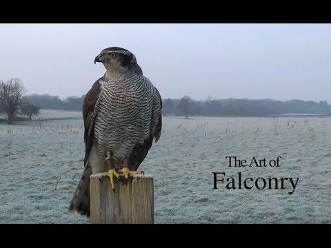 Falconry 3 | The Art of Falconry