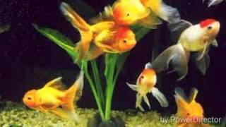 Уход за аквариумными рыбками (часть 2)