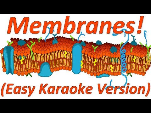 Membranes Rap, Easy Karaoke Version
