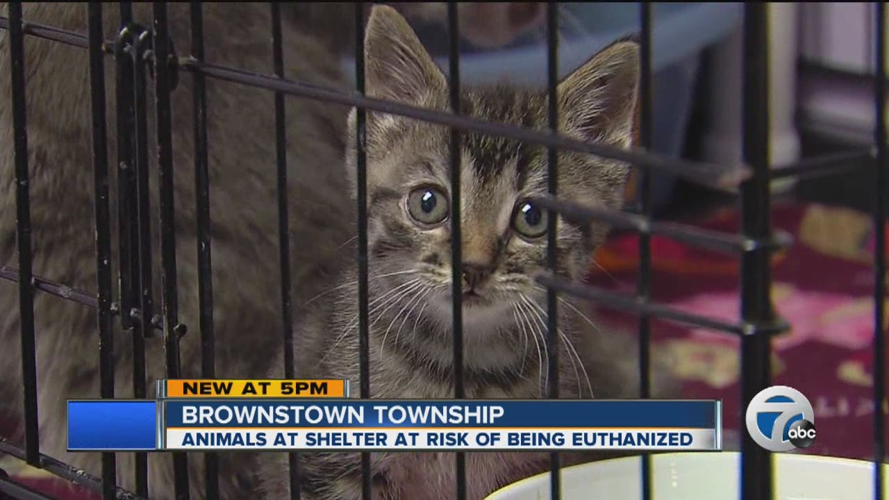 finding a solution for overcrowded animal shelters Our shelter does not place any time limits on a pet's stay  we will do some  research, find a solution and email you back with suggestions on how to correct  the.