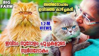 ആരും കാണാൻ കൊതിക്കുന്ന പേർഷ്യൻ ക്യാറ്റുകളുടെ മാസ്മരിക ലോകം|Persian cat|Oru Adaar Pets Story