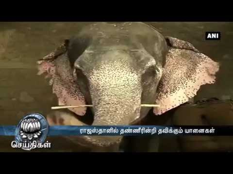 Elephants go thirsty as acute water crisis hits Rajasthan - Dinamalar June 8th 2016