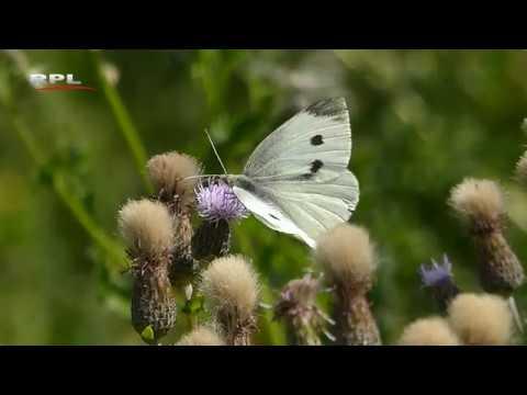 Natuur in de omgeving:  Summer vibe