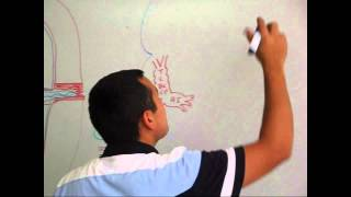 Formación y Desarrollo de Corazón