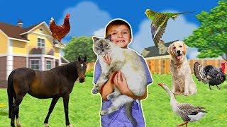 Домашние животные, какие они бывают? Увлекательный мир домашних животных для детей