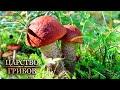 Благородные грибы. Царство грибов @Моя Планета