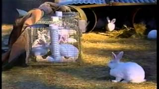 Rabbit Farming  In Australia