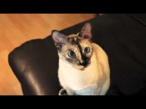 N2 The Talking Cat S1 Ep6 - Kona Gets Punished