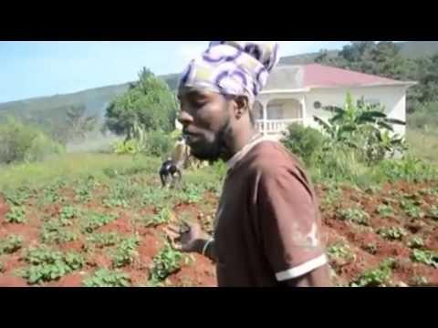 Jah Mason - Organic Food is the Future