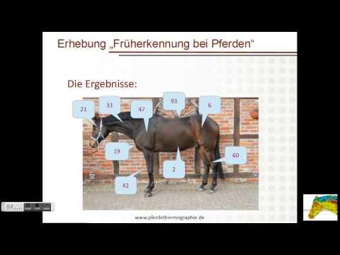 pferdethermographie-früherkennung