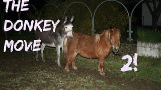 The Donkey movie 2! - Donkey meets his new wife.
