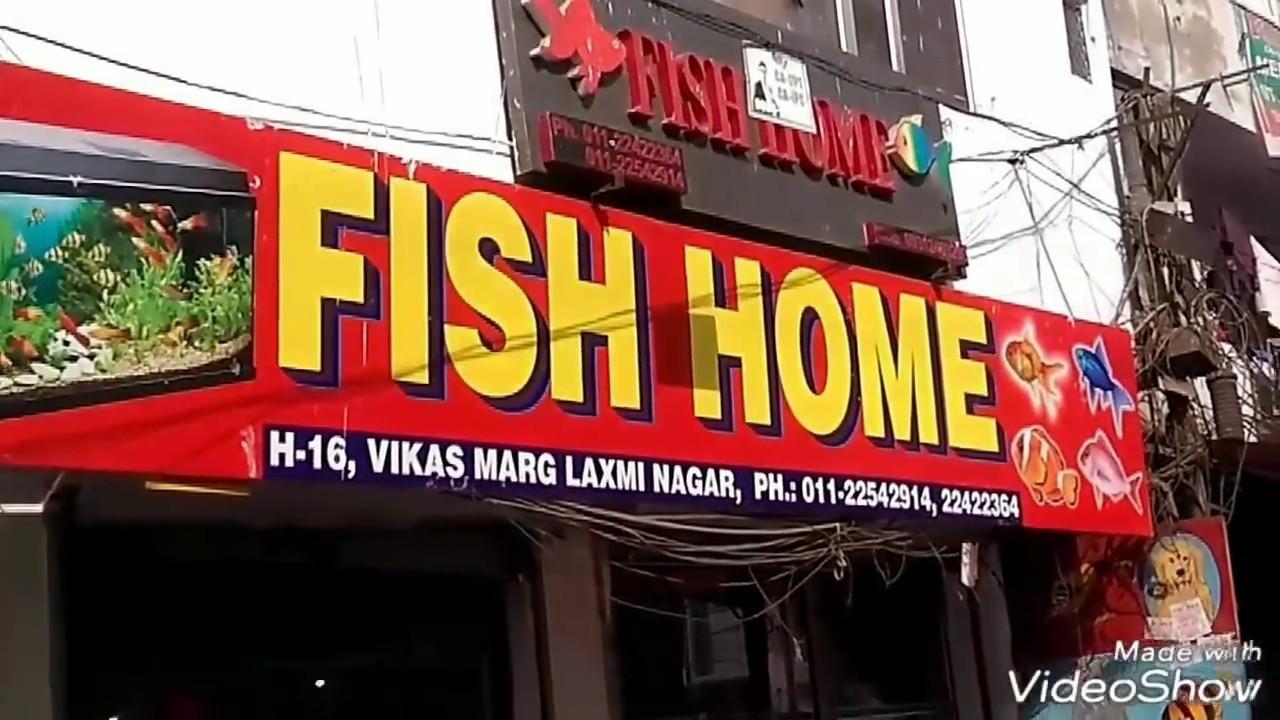Biggest Aquarium Fish Market In Delhi Laxmi Nagar Cheap Price