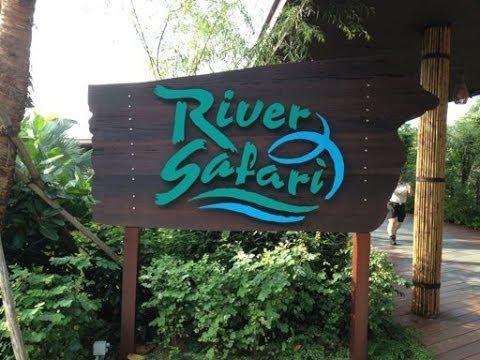 River Safari, Singapore, HD Experience