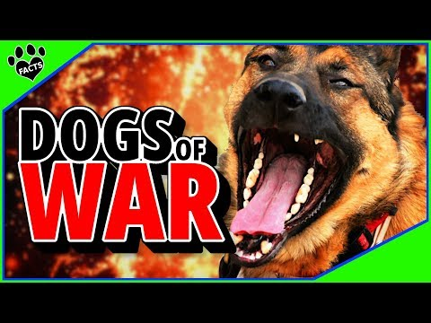 Dogs Of War - A History of Military Dogs