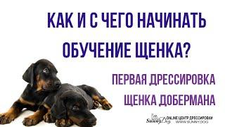 Как и с чего начинать обучение щенка? Первая дрессировка щенка добермана в домашних условиях