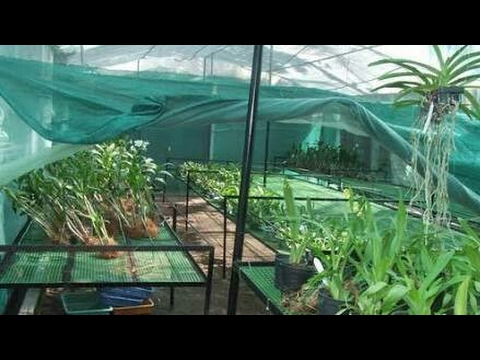 Different varieties of plants collection in Green house