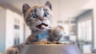 Chú Mèo Con Đến Trường Học | Kiều Hương