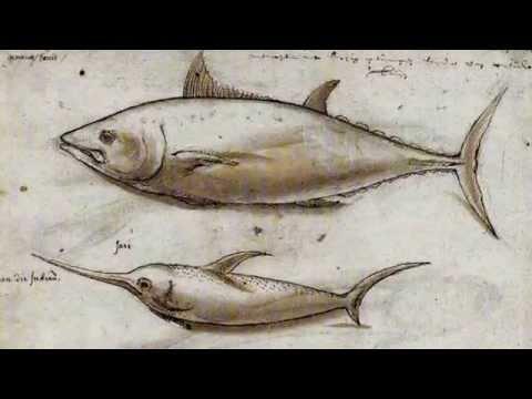 Swordfish Facts: 13 Facts About Swordfish