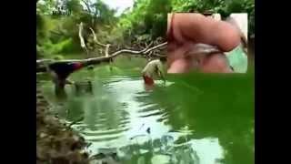 Красивые аквариумные рыбки гуппи(Самые лучшие видео с животными со всего мира! Подписывайтесь на наш канал!, 2015-05-18T17:39:32.000Z)