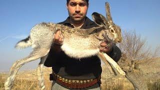 TAVŞAN AVI 01,Hare Hunting, , yataktan taşla kaldırılışı-кролик охота- Caccia alla lepreأرنب صيد-