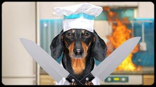 Greatest Chefs Battle!!! Cute & funny dachshund dog video!