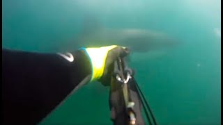 failzoom.com - KID ATTACKED BY SHARK VIDEO - real or fake?