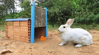 Technique Rabbit Trap Using Old Bricks With Flat Wood