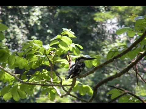 Birds Of Kerala Malayalam Youtube