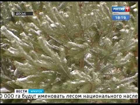 Первый в России лес национального наследия появится в Иркутской области