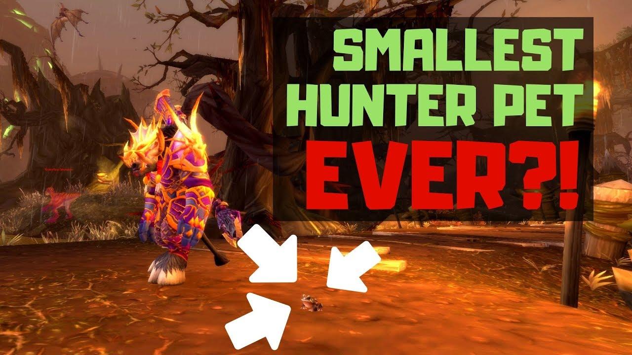 Smallest Hunter Pet Ever Bfa Youtube