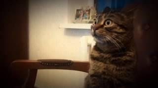 Моя кошка первый раз слышит DUB STEP!